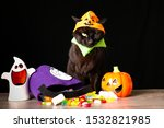 A black cat dressed as a Jack o Lantern stands on top of a wooden table next to Halloween candy against a black background
