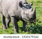 Critically Endangered African...