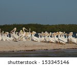 white pelicans at the... | Shutterstock . vector #153345146