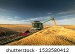 Pouring Corn Grain Into Tractor ...