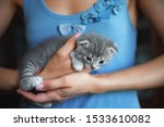 Stock photo kitten sitting on the palms of the girl in the blue shirt thoroughbred lop eared cat 1533610082