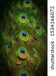 Multicolor Amazon Peacock With...