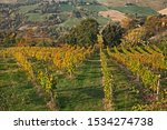 Bertinoro, Forli-Cesena, Emilia Romagna, Italy: autumn landscape of the countryside with vineyards for wine production