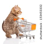 Stock photo british cat with shopping cart isolated on white kitten osolated 153453332