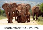 A Family Herd Of Elephants...