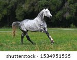 Dappled Gray Horse With Plated...