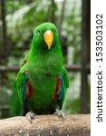 parrot bird sitting on the perch   Shutterstock . vector #153503102