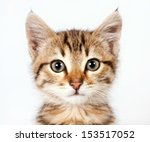 Stock photo portrait of a little tabby kitten closeup 153517052