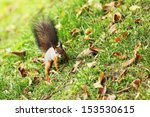 Squirrel Jumps In The Autumn...