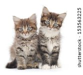 Stock photo two small siberian kittens on white background 153563225