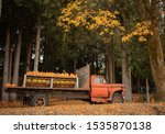 Orange Pumpkins In The Fall On...