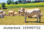 summer pastoral landscape  ... | Shutterstock . vector #1535907722