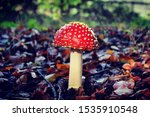 Red And White Fly Agaric...