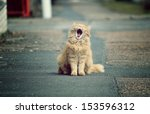 Stock photo beautiful funny cats in the streets 153596312