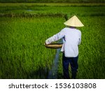 Rice Paddy Fields In Hoi An ...