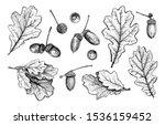 set of different hand drawn oak ...   Shutterstock .eps vector #1536159452