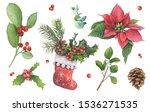 Christmas Plants. Poinsettia ...