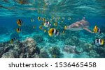 Shoal Of Colorful Tropical Fis...