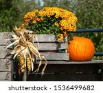 Fall Display With Mums And...