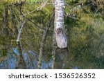 Tree In Water  Only Trunk...