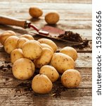 Potatoes  Spade And Soil On An...