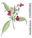 Botanical Illustration Of...