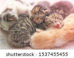 Stock photo newborn kittens sleeping small baby animals sleep 1537455455