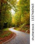 Stock photo autumnal road direction irati jungle navarre basque country 1537460465