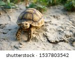 Stock photo close up african spurred tortoise resting in the garden slow life africa spurred tortoise 1537803542