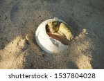 Stock photo close up baby tortoise hatching african spurred tortoise birth of new life cute baby animal 1537804028