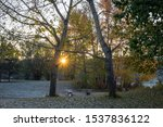 Sunrise Sunburst Seen Through...