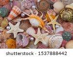 Tropical Colorful Seashells An...