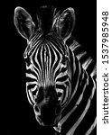 Black And White Zebra Portrait...