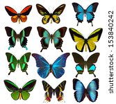Stock photo collection of tropical butterflies 153840242