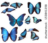 Stock photo collection of blue morpho butterflies 153841358