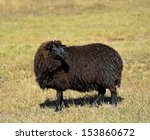 sheep graze in a pasture in the ... | Shutterstock . vector #153860672