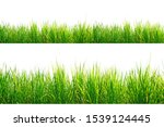 Green grass border isolated on...