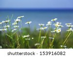 field of daisies with water in... | Shutterstock . vector #153916082