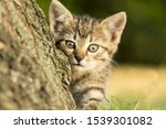 Stock photo closeup portrait of a gray kitten in the environment wonderful portrait of a gray kitten in the 1539301082