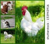 farm animals collage | Shutterstock . vector #153943916