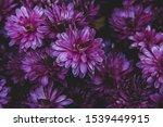 Bouquet Of Purple...