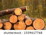 Freshly Cut Tree Logs Piled Up. ...