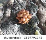 Mushrooms That Grow At The Bas...