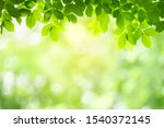 Green Leaf Background With...