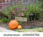 Traditional Halloween Pumpkins...