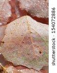icy plants   plants frozen into ...   Shutterstock . vector #154072886