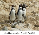 a nesting colony of  wild... | Shutterstock . vector #154077638