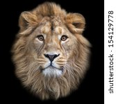 Stock photo the face of an asian lion isolated on black background the king of beasts biggest cat of the 154129778
