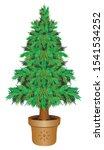 Eco Christmas Tree   A Living...