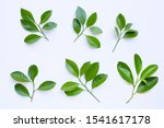 Citrus Leaves Circle On A Whit...